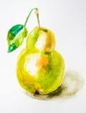 Ilustração da aguarela da pera Imagem de Stock