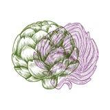 Ilustração da alcachofra do Anaglyph Vegetal do esboço imagens de stock