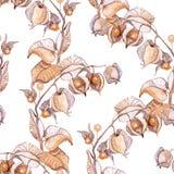 Ilustração da aquarela da cereja de inverno ilustração do vetor