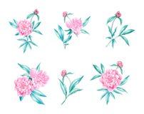 Ilustração da aquarela da flor das peônias Foto de Stock