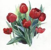 Ilustração da aquarela das tulipas Fotos de Stock Royalty Free