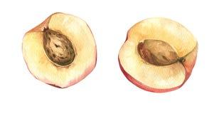 Ilustração da aquarela de pêssegos maduros Fotografia de Stock
