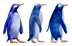 Ilustração da aquarela de três pinguins azuis wolking ilustração royalty free
