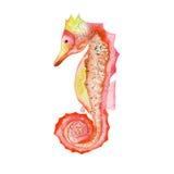 Ilustração da aquarela de um cavalo marinho (alaranjado) vermelho Imagens de Stock Royalty Free