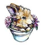 Ilustração da aquarela de um coelho Fotos de Stock Royalty Free