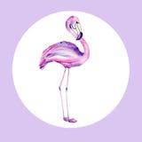 Ilustração da aquarela de um flamingo Imagem de Stock Royalty Free