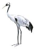 Ilustração da aquarela de um guindaste do pássaro Fotografia de Stock