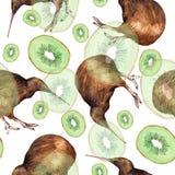 Ilustração da aquarela de um pássaro do quivi Fotos de Stock Royalty Free