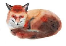 Ilustração da aquarela de uma raposa Fotos de Stock