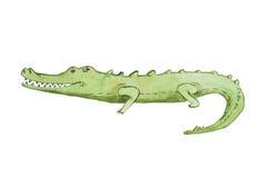 Ilustração da aquarela do aquarelle tirado mão do crocodilo Foto de Stock