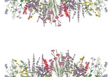 Ilustração da aquarela do cartão das flores imagens de stock royalty free