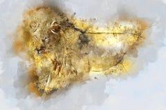 Ilustração da aquarela do leão Fotos de Stock