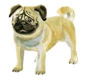 Ilustração da aquarela do pug do cão no fundo branco Fotos de Stock Royalty Free