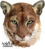 Ilustração da aquarela do puma Fotografia de Stock