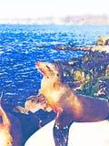 Ilustração da aquarela do selo no oceano ilustração royalty free