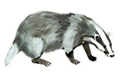 Ilustração da aquarela do texugo no fundo branco ilustração do vetor