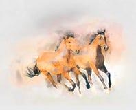 Ilustração da aquarela dos cavalos Fotos de Stock