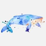 Ilustração da baleia azul Fotos de Stock Royalty Free