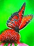 Ilustração da borboleta Foto de Stock