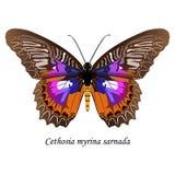 Ilustração da borboleta de Sulawesi Foto de Stock