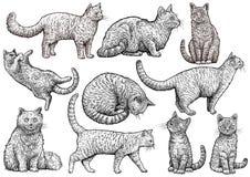 Ilustração da coleção do gato, desenho, gravura, tinta, linha arte, vetor ilustração stock