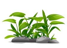 Ilustração da composição das plantas decorativas Imagem de Stock