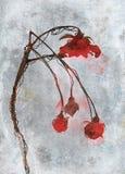 Ilustração da flor Foto de Stock Royalty Free