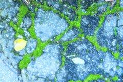 A ilustração da folha do outono no asfalto moeu com musgo verde ilustração royalty free