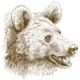 Ilustração da gravura da cabeça do urso Imagem de Stock