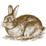 Ilustração da gravura do coelho Imagem de Stock