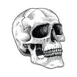 Ilustração da gravura do desenho da mão do crânio Fotos de Stock