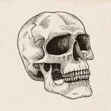 Ilustração da gravura do desenho da mão do crânio no fundo do vintage Imagens de Stock