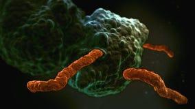 Ilustração da imagem do microscópio de elétron das bactérias Foto de Stock Royalty Free