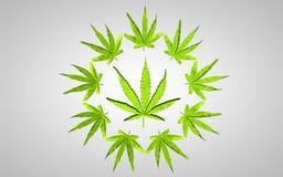 Ilustração da marijuana 3d Folha grande em um círculo das folhas pequenas No fundo cinzento com leve vinheta Imagens de Stock Royalty Free