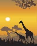 Ilustração da paisagem da noite do vetor ilustração do vetor