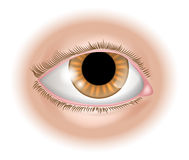 Ilustração da parte do corpo do olho Fotos de Stock