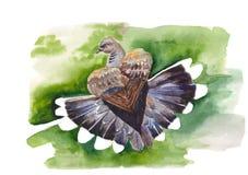 Ilustração da pomba Fotografia de Stock Royalty Free