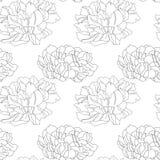 Ilustração da textura da flor do Pion ilustração royalty free