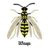 Ilustração da vespa do vetor Fotos de Stock