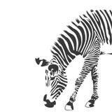 Ilustração da zebra em preto e branco Foto de Stock Royalty Free