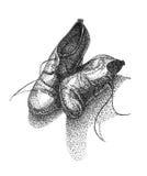 Ilustração das botas de couro da mulher Fotografia de Stock