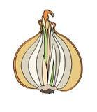 Ilustração das cebolas no fundo branco Fotografia de Stock