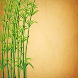 ilustração das filiais de bambu ilustração do vetor