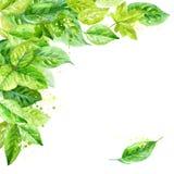 ilustração das folhas da mola composição angular da aquarela Fotografia de Stock
