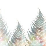 Ilustração das folhas da samambaia no fundo branco Teste padrão 2 Fotografia de Stock Royalty Free