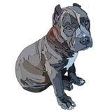 Ilustração de assento do vetor do pitbull do cachorrinho fotos de stock