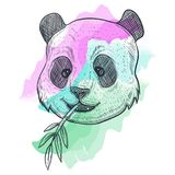 Ilustração DE BAMBU do vetor da aquarela da panda ilustração do vetor