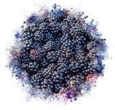Ilustração de Blackberry ilustração stock