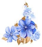 Ilustração de cor das flores em pinturas da aquarela Fotos de Stock