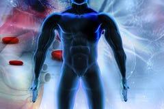 Ilustração de Digitas do corpo humano Imagens de Stock Royalty Free